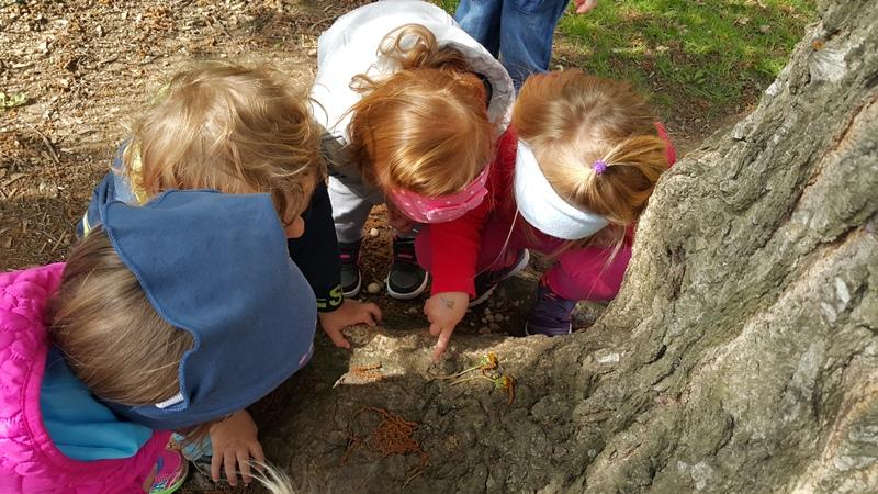 Enota Čira čara: Raziskovanje in doživljanje narave